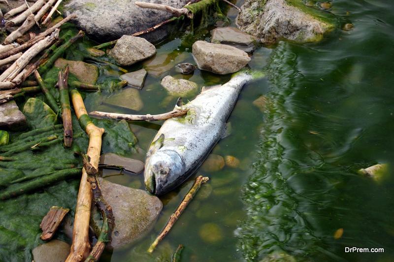 Poisoning of fish