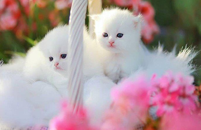 30 Cute Cat Pictures  Incredible Snaps