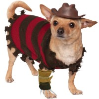 A Freddy Krueger Costume For Pets