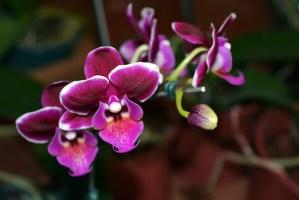 orchidee ferme aux crocos