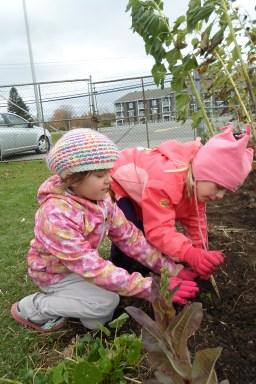 Deux fillettes qui jardinent dans la cour d'école.