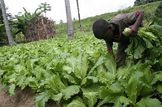 eKilimo Transforming Tanzania's Agri Sector through mobile platform
