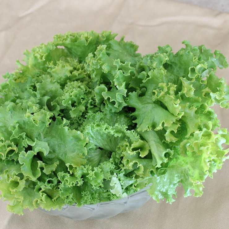 Green-Leaf-Lettuce-science-arctic-mars