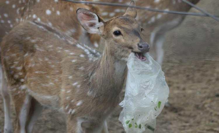 plastic pollution incubatorium environment