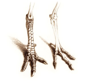 Chicken legs with similar formations