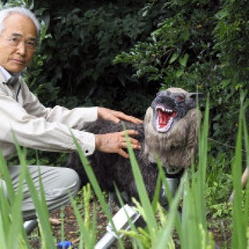 Growling 'Super Monster Wolf' guards rice fields