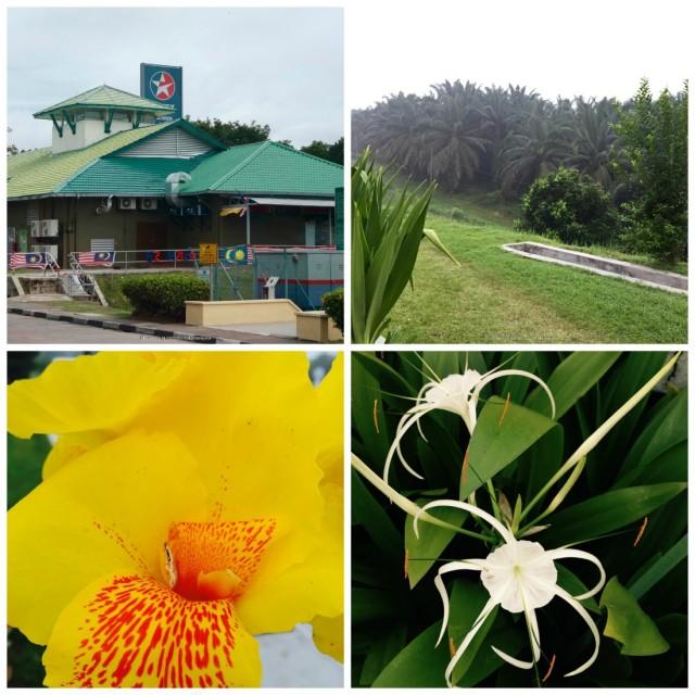 Uton-Malajziaban-piheno