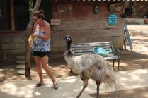 That was some hungry emu!