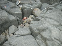 Land crabs smashed against the rocks.