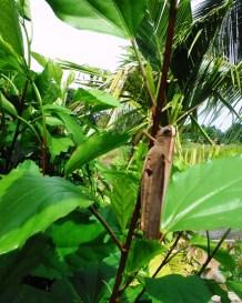grasshopper 3