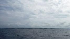 whale 5