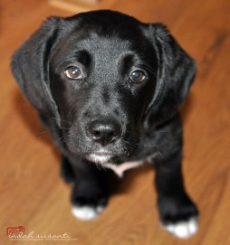 Dante junior dog