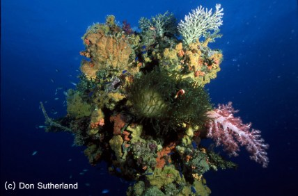 Image by Don Sutherland - Colorful corals