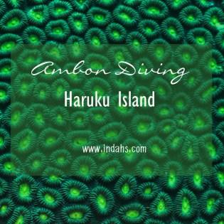 Haruku Island Underwater