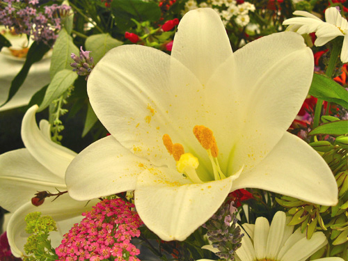 Lily feel good gift