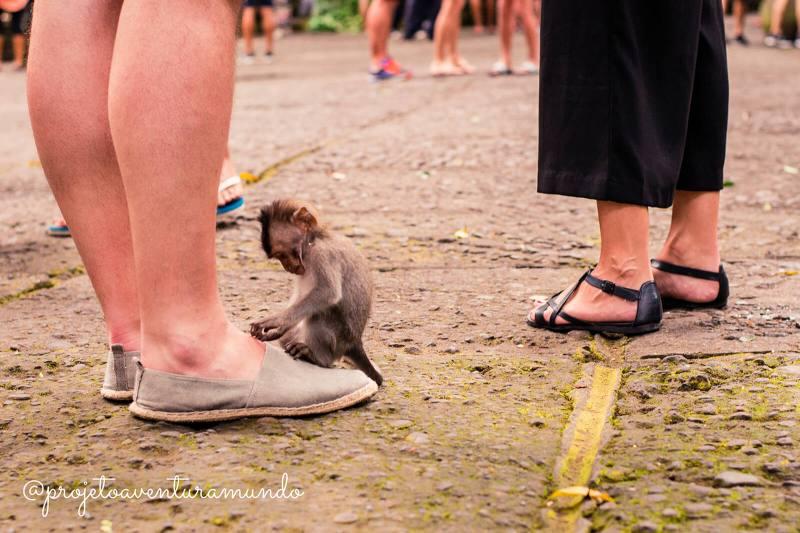 Filhote de macaco descobrindo o mundo na Monkey Forest - Ubud - Indonesia