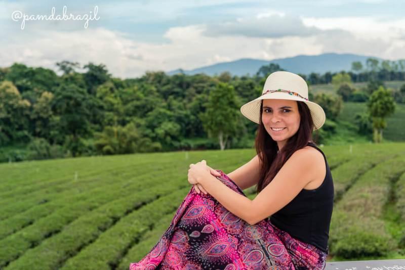 Chiang Rai: Plantações de Chá