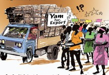 Yam For Export