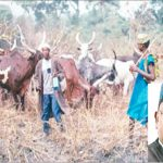 Fulani Herdsmen,Benue