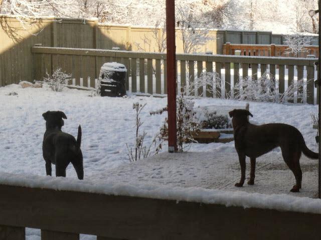 Brooks-neighbor-dogs-barking