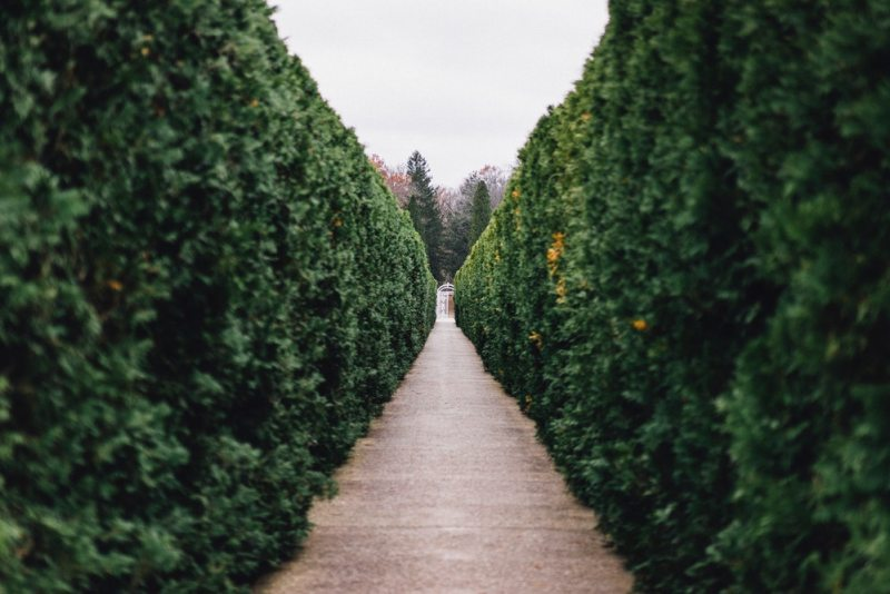 Hedge-green-living-fence-path