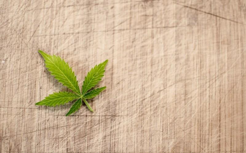 Marijuana leaf cannabis