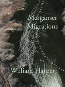 Merganser Migration