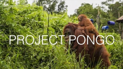 Project Pongo