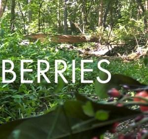 Berries (Script)