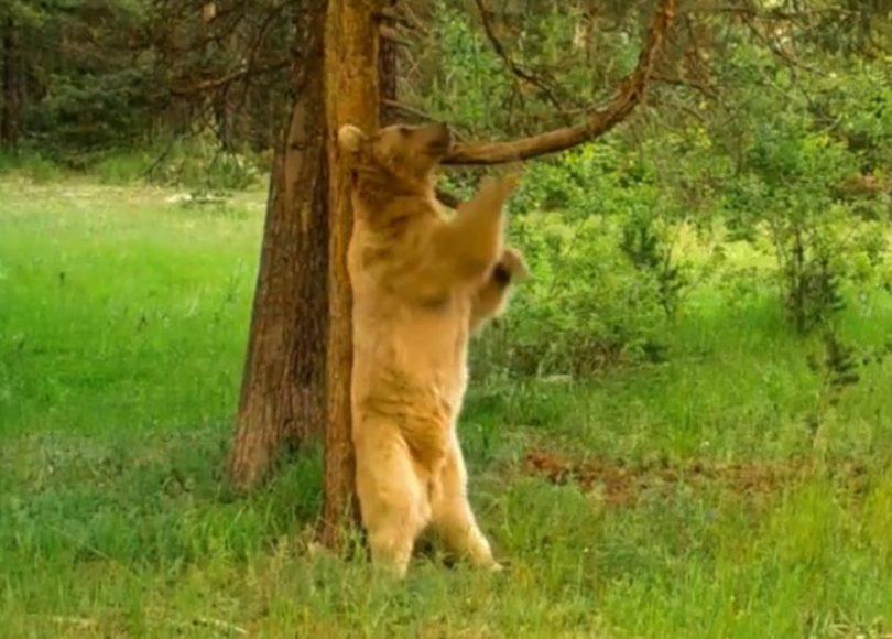 Saving Earth: Turkey's Wildlife Corridor