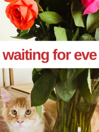 Waiting for Eve