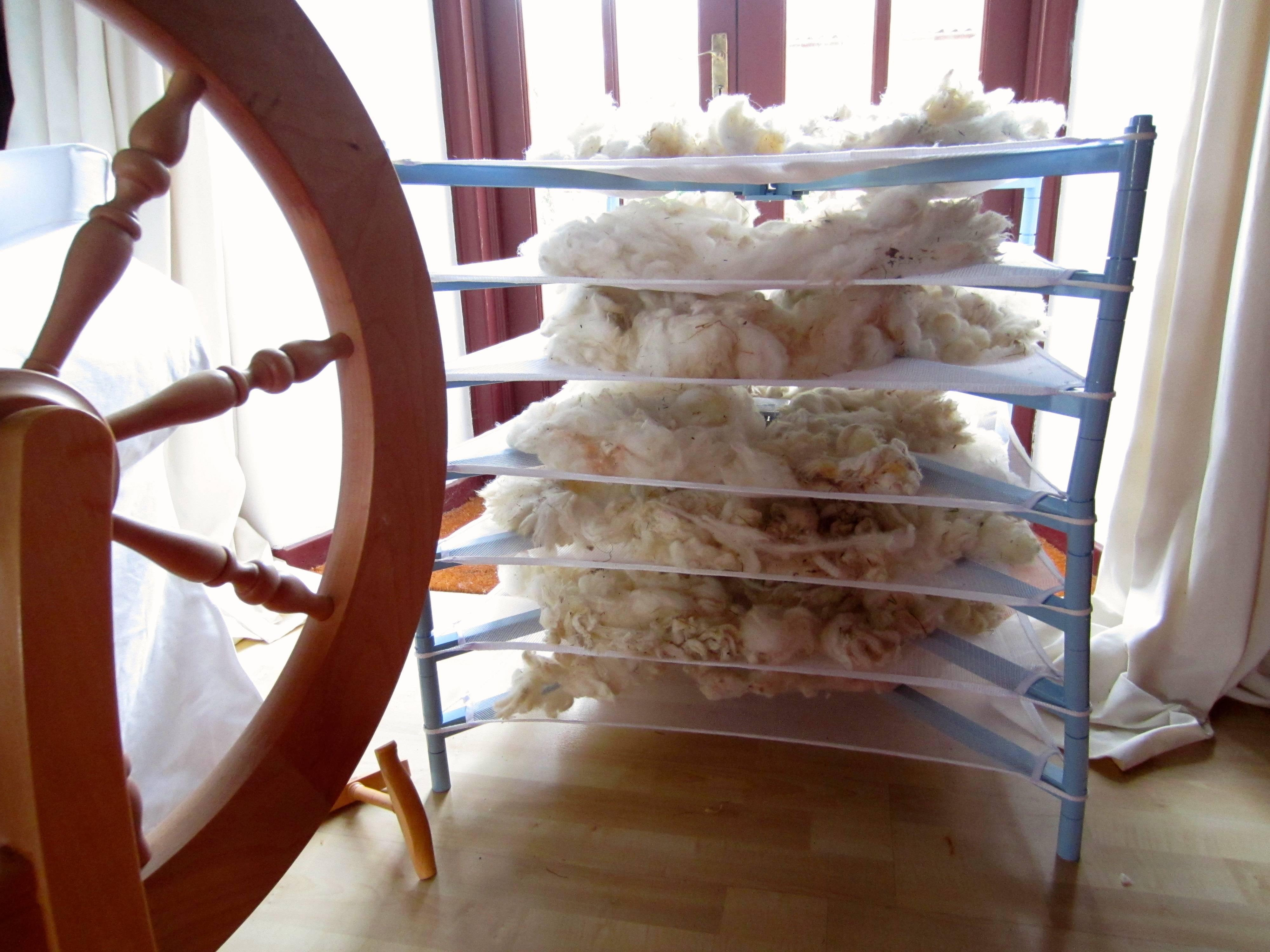 Drying white Ryeland fleece
