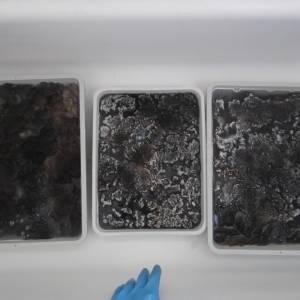 Washing colo(u)red Ryeland fiber