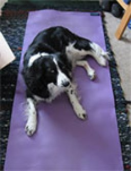 Border collie on a yoga mat