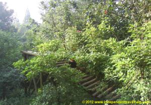 independent travel, foto friday, red panda, animal, china, chengdu, asia, panda