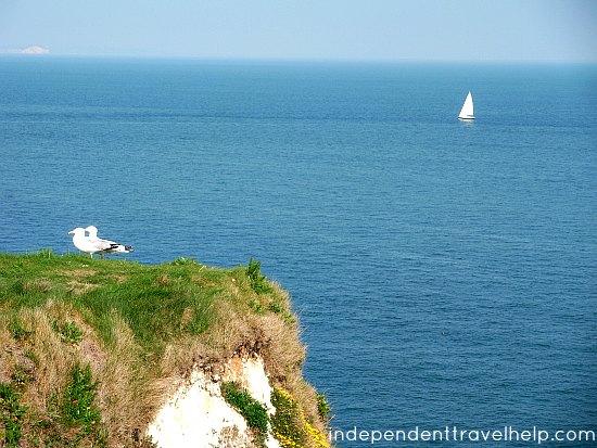 paradise, birds, seagulls, boat, dorset, england, purbeck