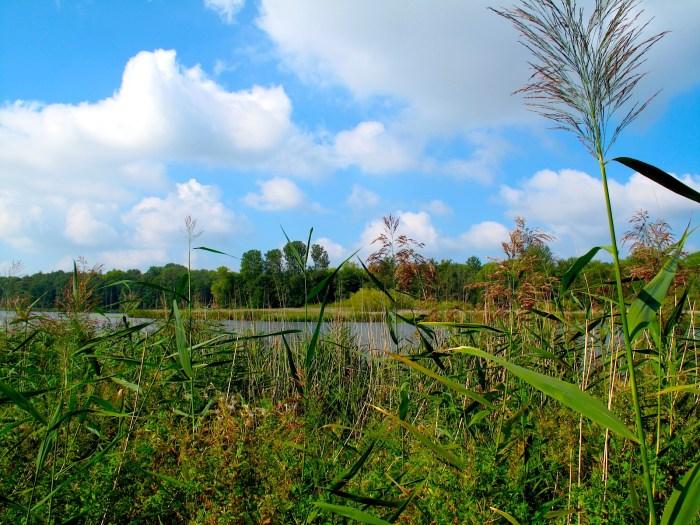 Schlei bei Schleswig