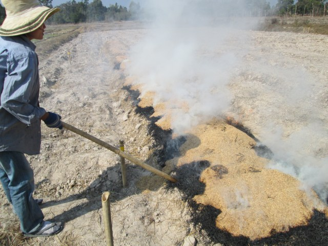 Rice straw and rice bran burned openly on two nursery raised-beds. This is the commonly known practiced in the rudy area to produce vegetable crops. This method will be our control.