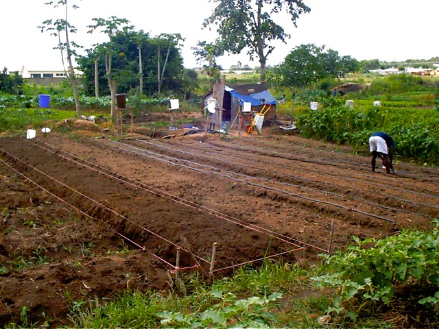 Agric._014