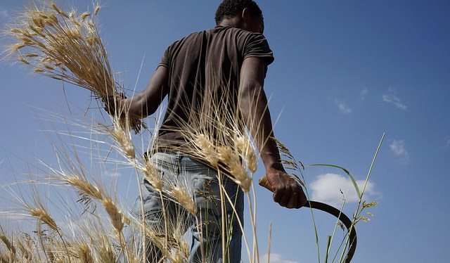 Climate insurance for farmers: a shield that boosts innovation