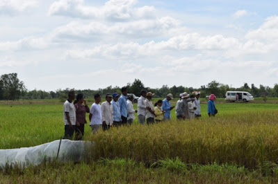 Cambodian farmers participate in cross-site visits to learn about Integrated Pest Management practices