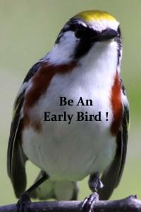 bird 2 copy