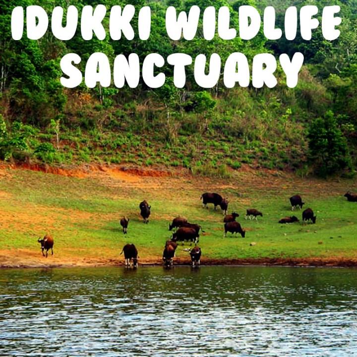 Kochi weekend getaway road trip idukki wildlife sanctuary