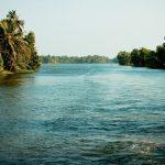Coconut and Mangrove Dreams