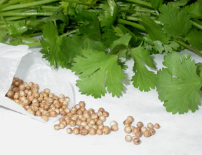 Back to Basics: Cilantro's Cures