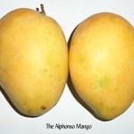 My Summer Tango with the Mango