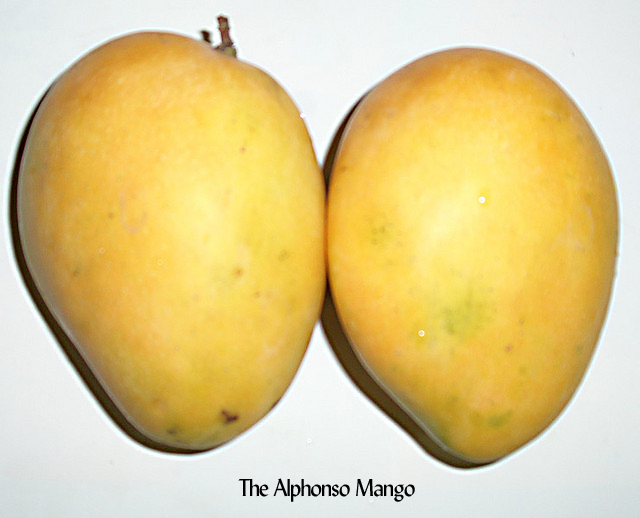 My Summer Tango with the Mango