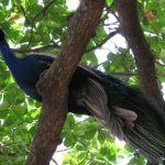 Girivalam: Experience at Tiruvannamalai