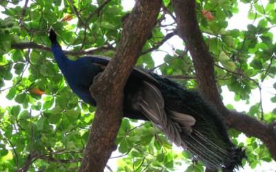 Girivalam: Unique Experience at Tiruvannamalai