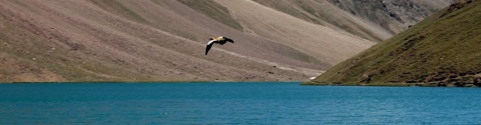 Bird flying over Chandrataal Lake, Spiti, Hiumachal Pradesh, Adventure tours in India